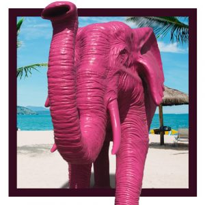 Roze Olifant - Rottumhuys Caribbean - Curaçao